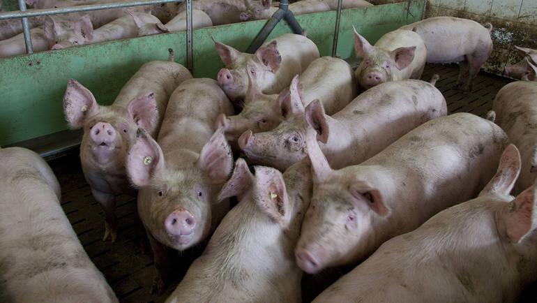 Aktionsplan Tierschutz in der Landwirtschaft - Bundestagsfraktion ...