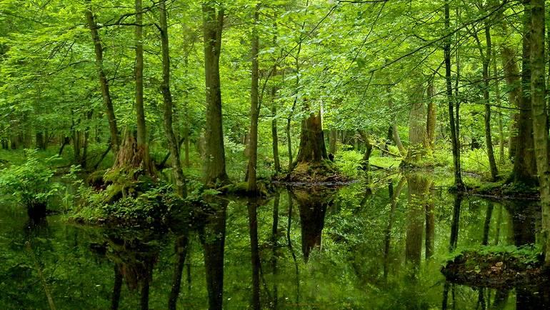 europas urwälder schützen  bundestagsfraktion bündnis 90